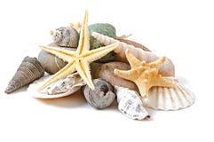 Sjöstjärna, snäckskal och stenar Arkivbild