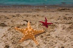 Sjöstjärna som är stor och som är liten på sand Royaltyfri Bild