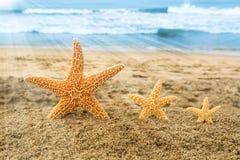 Sjöstjärna som tre förbiser havet Arkivbild