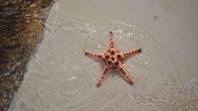Sjöstjärna vid havet arkivbild