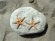 Sjöstjärnaduett på stenen Arkivfoto