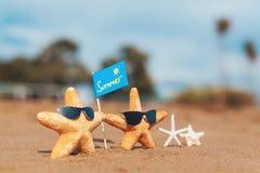 Sjöstjärnafamilj med ögonexponeringsglas på stranden sommar för snäckskal för sand för bakgrundsbegreppsram royaltyfri foto