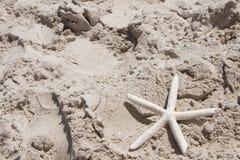 Sjöstjärnakammusslaskal sätter på land semester och ferie för sommar för skalhavssand Royaltyfria Foton