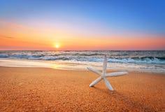 Sjöstjärnaskal på stranden Arkivfoto