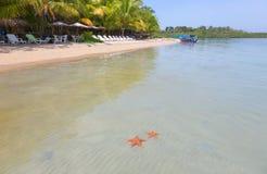 Sjöstjärnastrand, Bocas del Toro, Panama Royaltyfri Bild