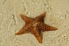 sjöstjärnavatten Arkivfoto