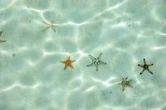 sjöstjärnavatten royaltyfria bilder