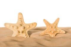 Sjöstjärnor i sand Arkivfoto