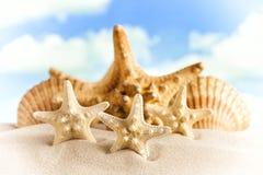 Sjöstjärnor och skal på strandsand royaltyfria foton