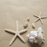Sjöstjärnor och snäckskal Arkivfoto