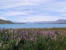 SjöTekapo sommar Nya Zeeland Arkivbilder