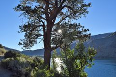 Sjöträd mot bergbakgrund royaltyfri fotografi