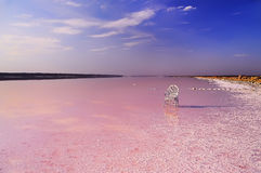 Sjö med rosvatten och en stol i vattnet Arkivbilder