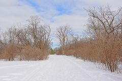 Sjam hiking and cross country skiing trail along bare trees and shrubs stock photography