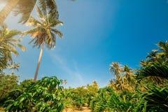 Sjaskigt för lopp för ferie för bakgrund för landskap för natur för ekvator för palmträdsolljus varm tropisk tonat design Arkivbilder