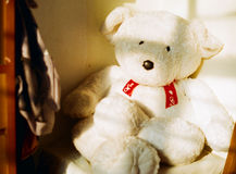 Sjesta Niedźwiedź Zdjęcia Royalty Free