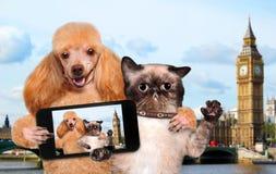 Självporträtthund och katt Arkivfoto