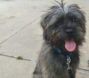 Sjofel Puppy Royalty-vrije Stock Afbeeldingen