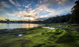 Sjösida runt om Sydney Arkivfoton