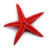 sjöstjärna Royaltyfri Bild
