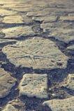 Sjöstjärnafossil i en förberedande sten Arkivbild