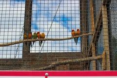 Sju färgrika papegojor som sitter på filialen Arkivfoto