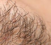 Sju - gammalt skägg för dag uppsöka upp tät dagmakro male gammala sju för caucasianen tät blommaflugamakro som vilar upp Arkivfoton