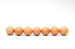 Sju isolerade ägg Royaltyfria Foton
