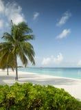 Sju Miles Beach på den storslagna kajmanön Royaltyfria Bilder