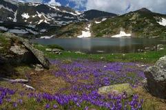 Sju Rila sjöar, Bulgarien - sommar över fisk sjön Royaltyfria Foton