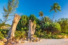 Sju Strand-döda träd för mil arkivbilder