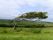 Sju systrar, England som är naturlig parkerar Arkivfoton