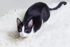 Sjuk blind katt, sårat, blint, räddat från stadsgator Världsdaghusdjur, begrepp för skydddjur arkivfoton