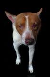 Sjuk hemlös hund Royaltyfri Foto