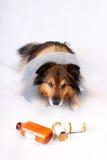 sjuk hund royaltyfri foto