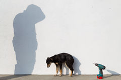 sjuk hund Royaltyfria Bilder