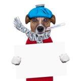 Sjuk hund med feber Royaltyfri Foto
