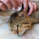 Sjuk katt Royaltyfri Bild