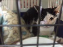 sjuk katt Arkivfoton