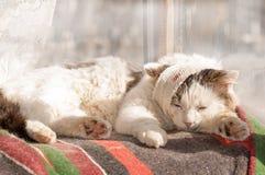 Sjuk katt Arkivfoto