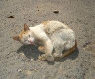sjuk katt Royaltyfri Fotografi