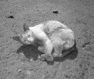 sjuk katt Royaltyfri Foto
