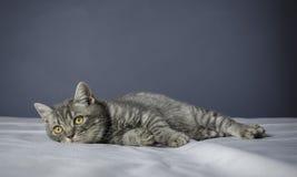 Sjuk katt på en tabell med mediciner Royaltyfri Foto