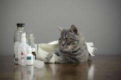 Sjuk katt på en tabell med mediciner Arkivfoton