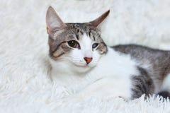 Sjuk katt, sårat, räddat från stadsgator, blickar med misstro, skräck Världsdaghusdjur, begrepp för skydddjur arkivbild