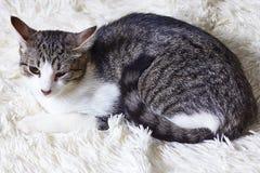 Sjuk katt, sårat, räddat från stadsgator, blickar med misstro, skräck Världsdaghusdjur, begrepp för skydddjur arkivfoto