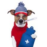 Sjuk sjuk kall hund Arkivfoto