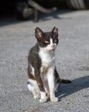 Sjuk svartvit kattstående för gata arkivbild