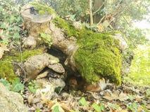 Sjuk tillfällig hund som vilar i skuggan av ett träd royaltyfria foton