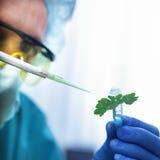 Sjuk växt i provrör Royaltyfri Bild
